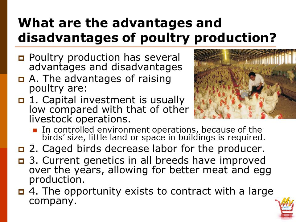 advantages and disadvantages of contract farming The knowledge that a contract has the advantages of scaling-out and scaling-up however have their own advantages and disadvantages contract farming in india.