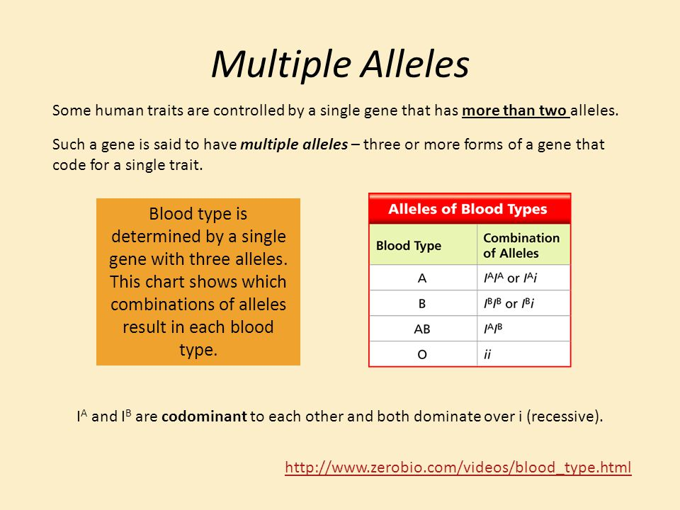 Multiple Alleles Some human traits are controlled by a single gene that has more than two alleles.