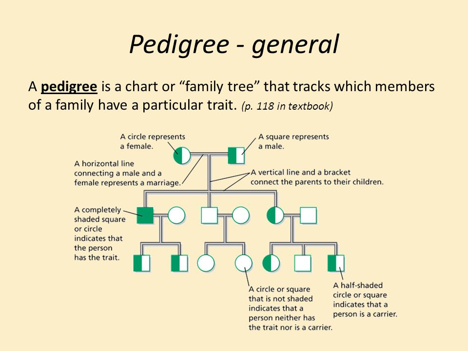 Pedigree - general A pedigree is a chart or family tree that tracks which members of a family have a particular trait.