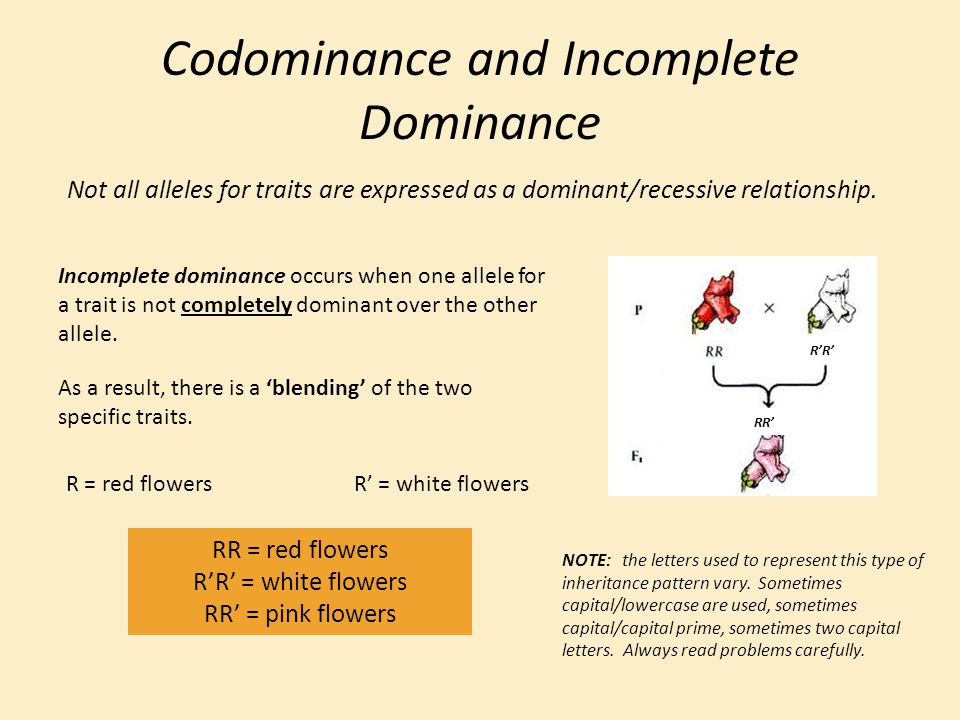 Codominance and Incomplete Dominance