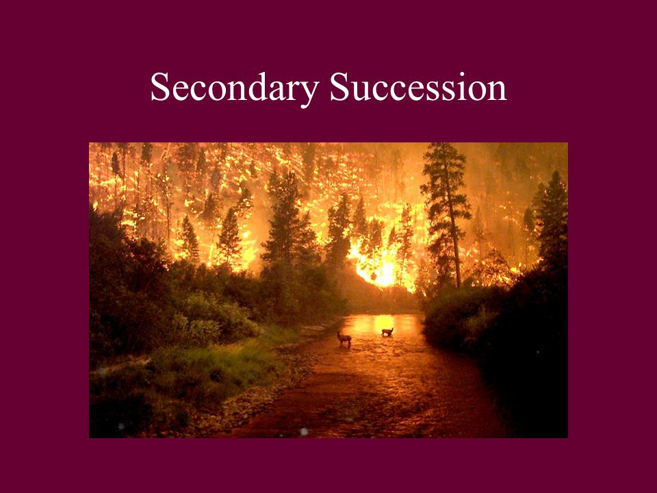 Ecological Succession Ppt Video Online Download