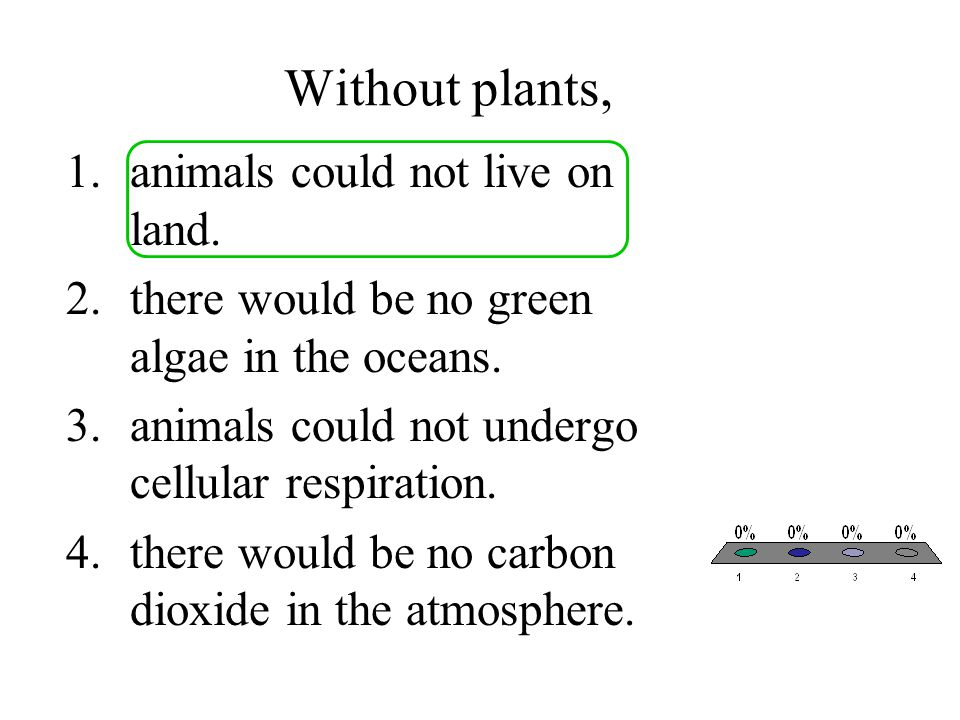 Without plants, animals could not live on land.