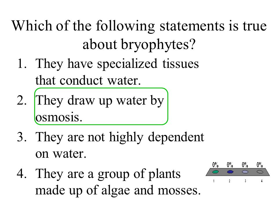 Which of the following statements is true about bryophytes