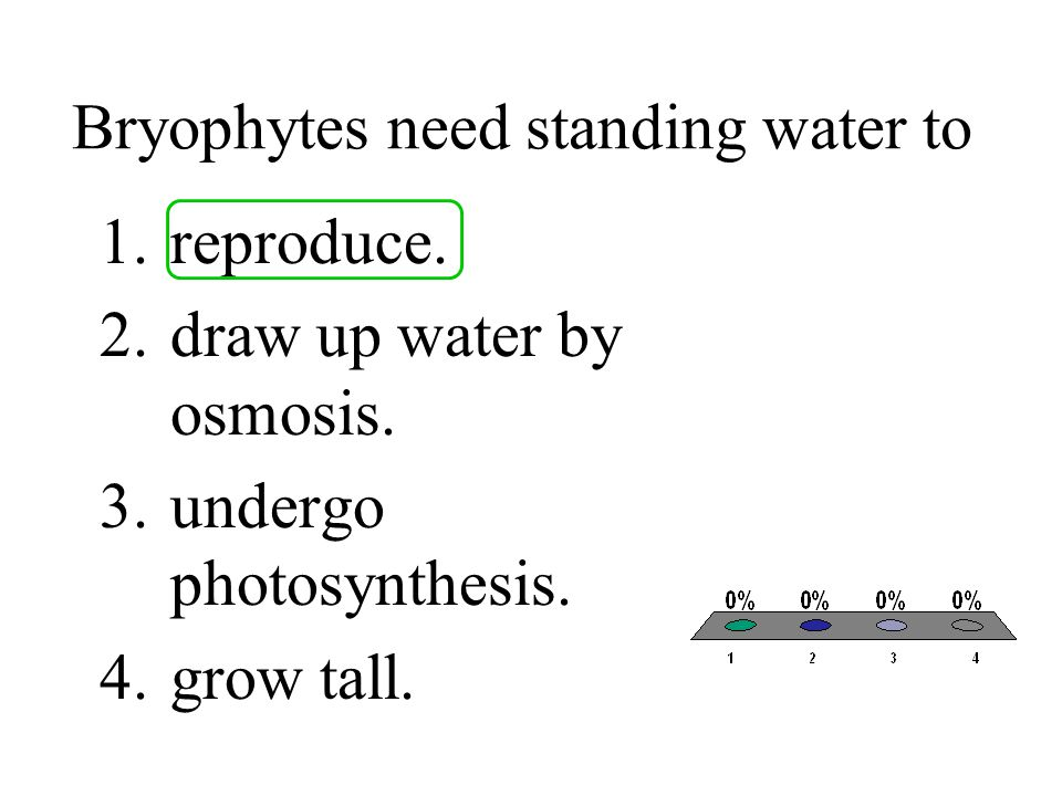 Bryophytes need standing water to