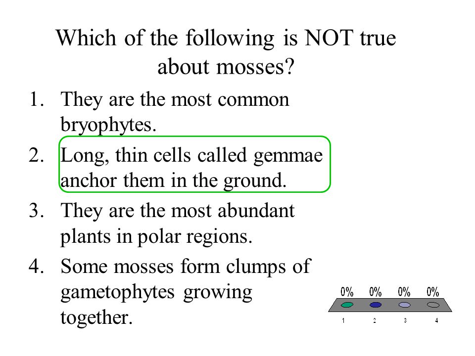Which of the following is NOT true about mosses