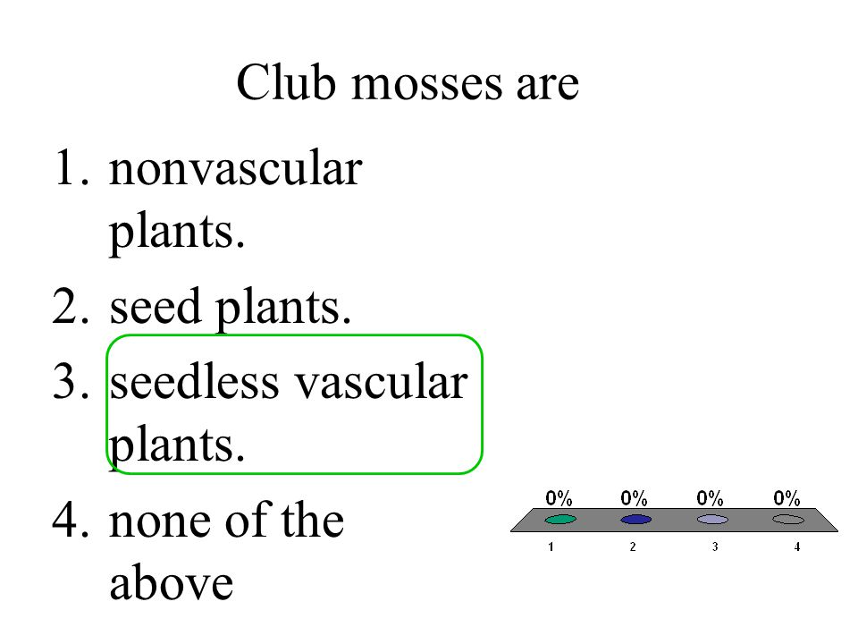 Club mosses are nonvascular plants. seed plants. seedless vascular plants. none of the above