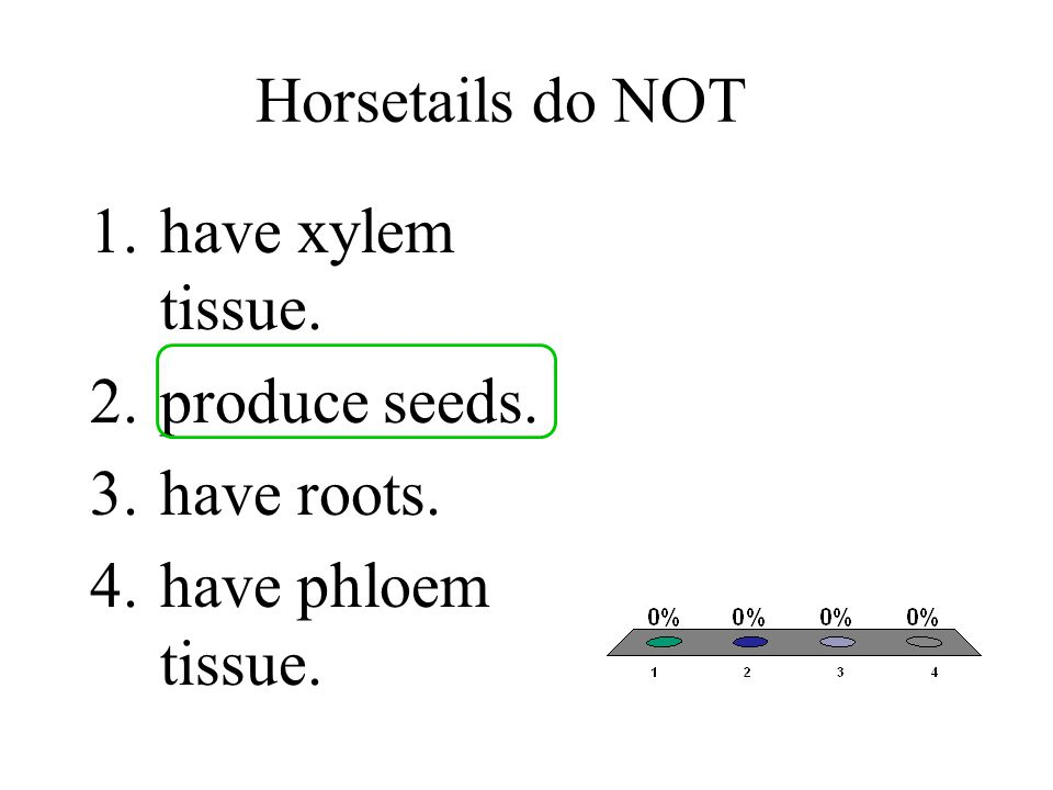 Horsetails do NOT have xylem tissue. produce seeds. have roots. have phloem tissue.