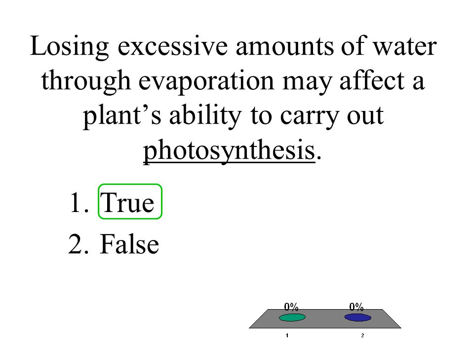 Losing excessive amounts of water through evaporation may affect a plant's ability to carry out photosynthesis.