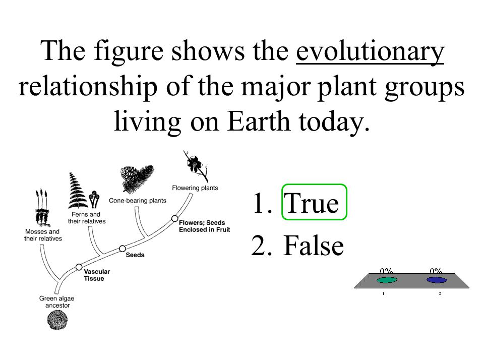 The figure shows the evolutionary relationship of the major plant groups living on Earth today.