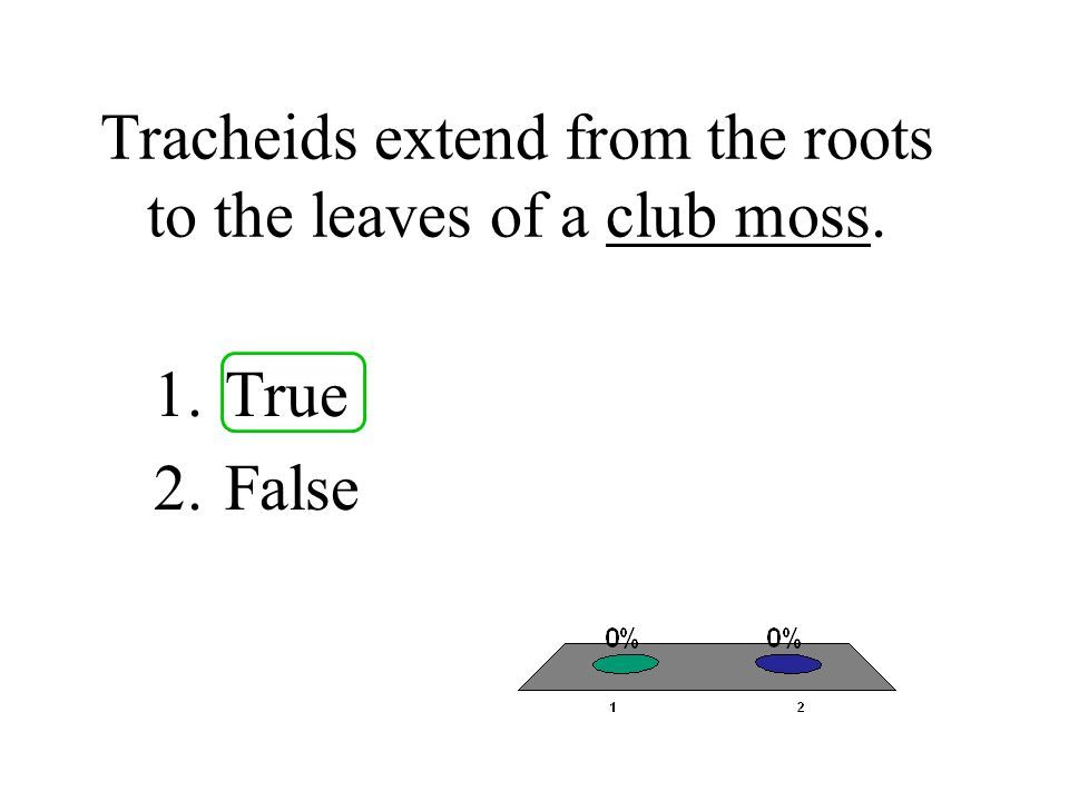 Tracheids extend from the roots to the leaves of a club moss.