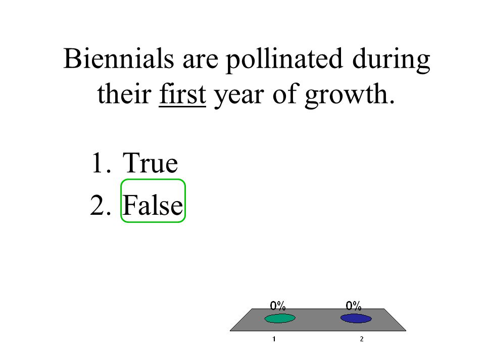 Biennials are pollinated during their first year of growth.
