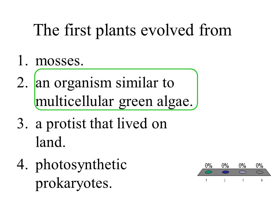 The first plants evolved from