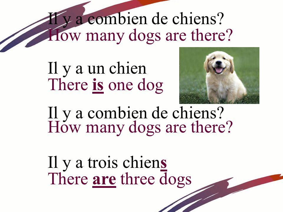 Il y a combien de chiens How many dogs are there Il y a un chien. There is one dog. Il y a combien de chiens