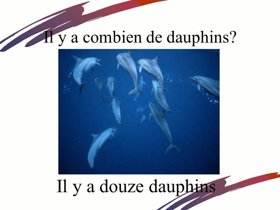 Il y a combien de dauphins