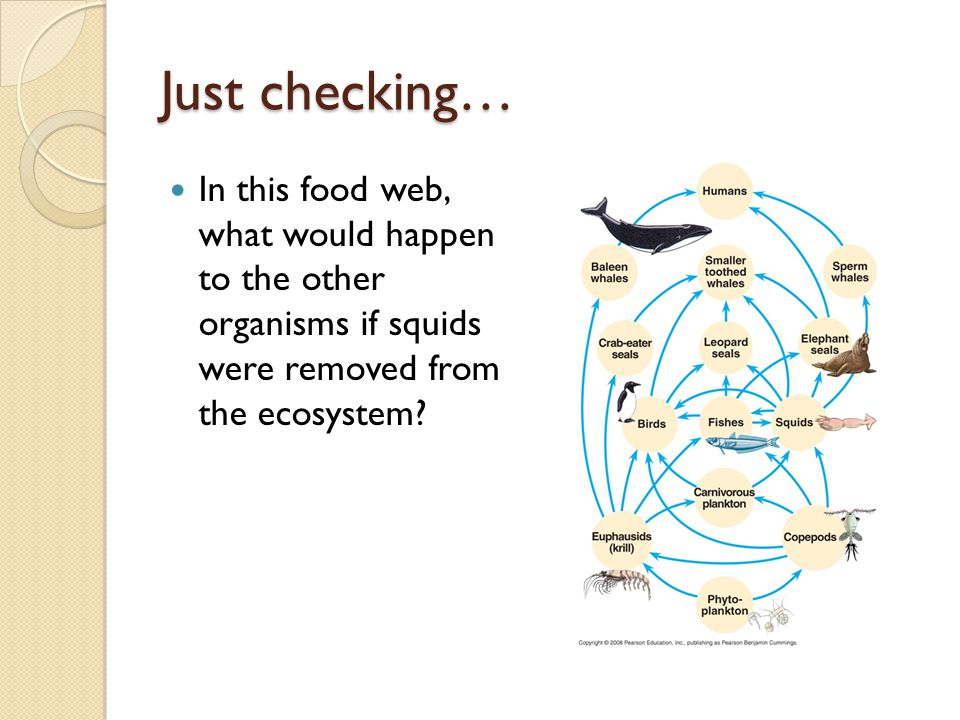 Which Organism If Removed Would Impact The Food Web Most
