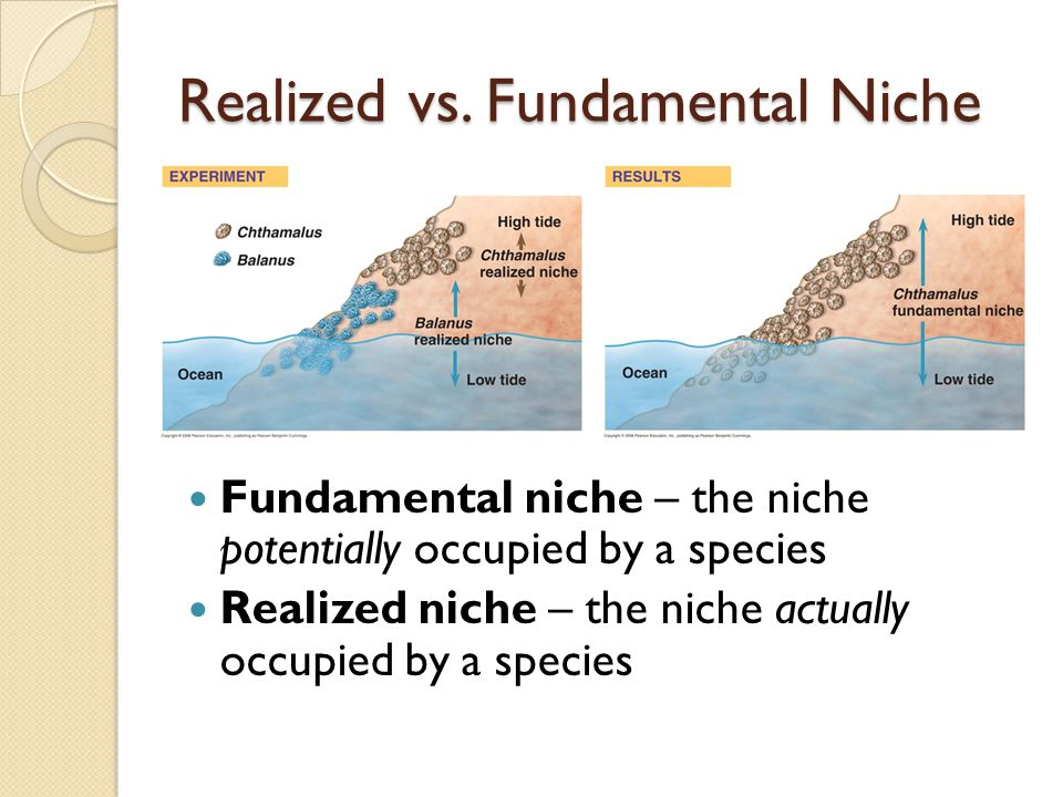 fundamental market or concluded niche market examples