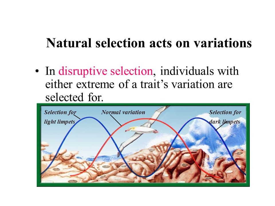 Natural Selection Acts On The