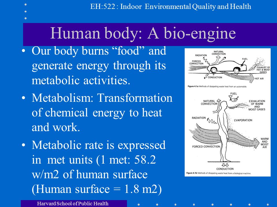 Human Body A A Bio Engine