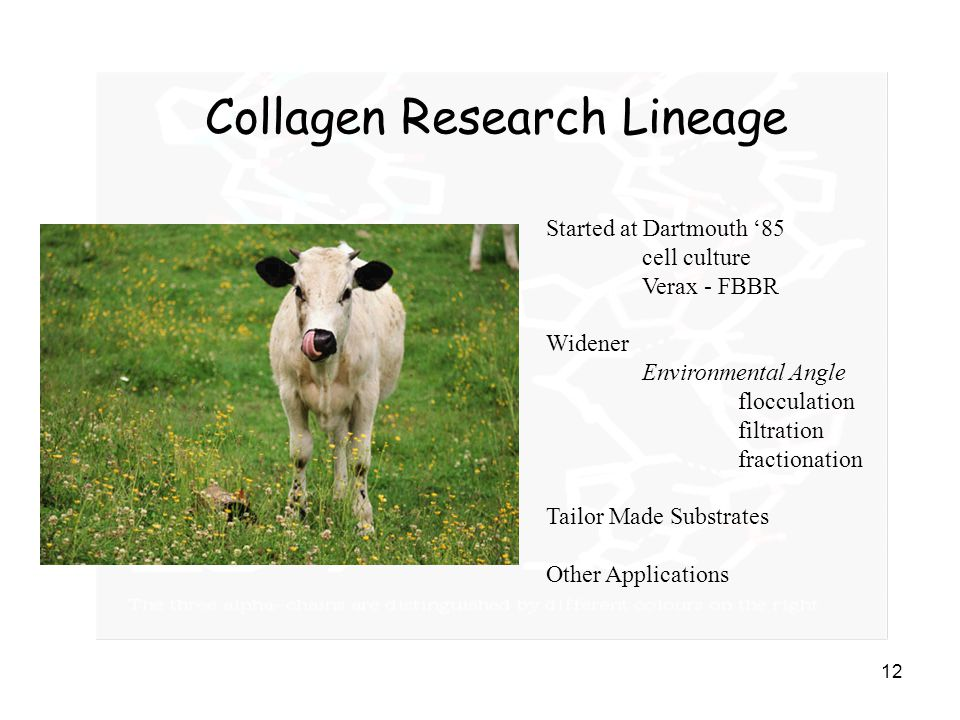 Collagen Research Lineage