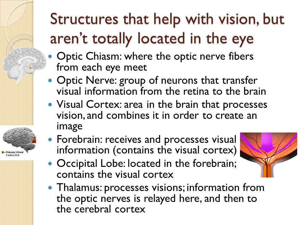 olfaction and vision meet in the retina