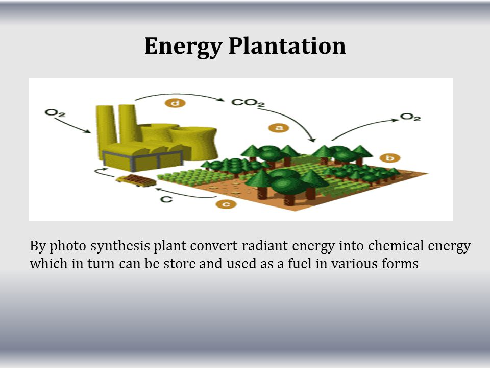 Energy Plantation By photo synthesis plant convert radiant energy into chemical energy which in turn can be store and used as a fuel in various forms.
