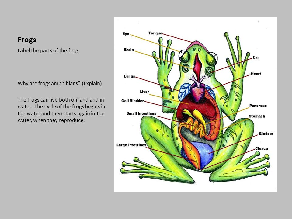Reptile and Amphibian Study - scoutingweb.com