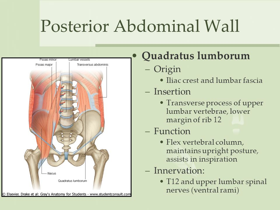 PPT  Thoracic and Lumbar Spine Anatomy PowerPoint