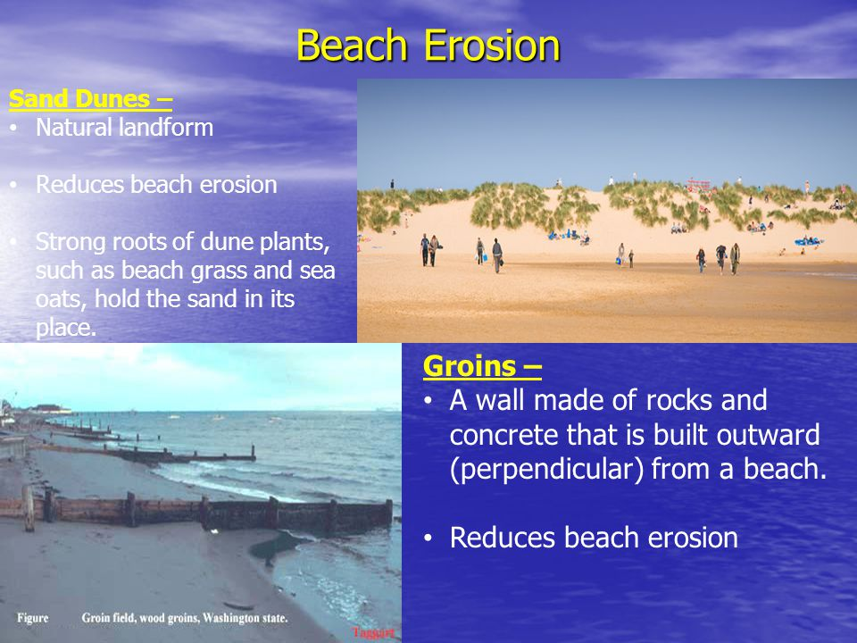 Beach Erosion Sand Dunes – Natural landform. Reduces beach erosion.