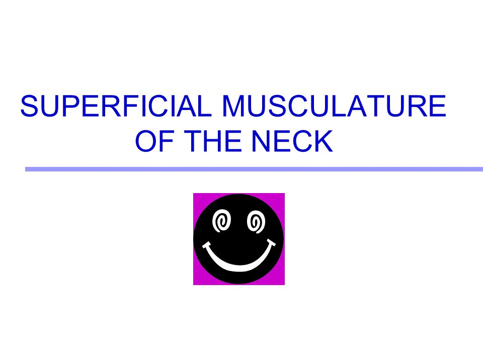 SUPERFICIAL MUSCULATURE OF THE NECK