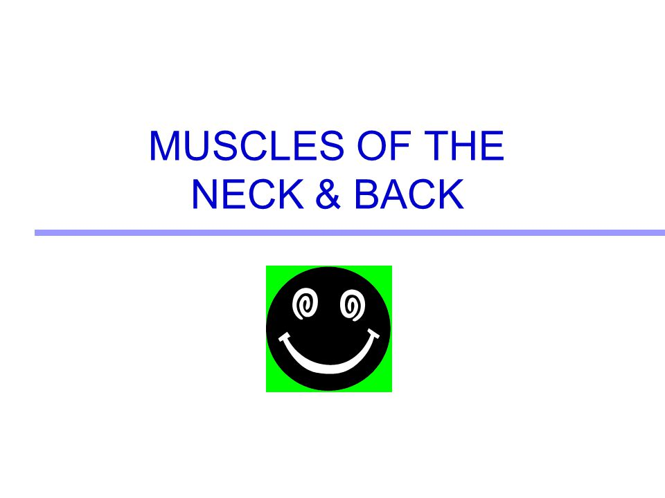 MUSCLES OF THE NECK & BACK