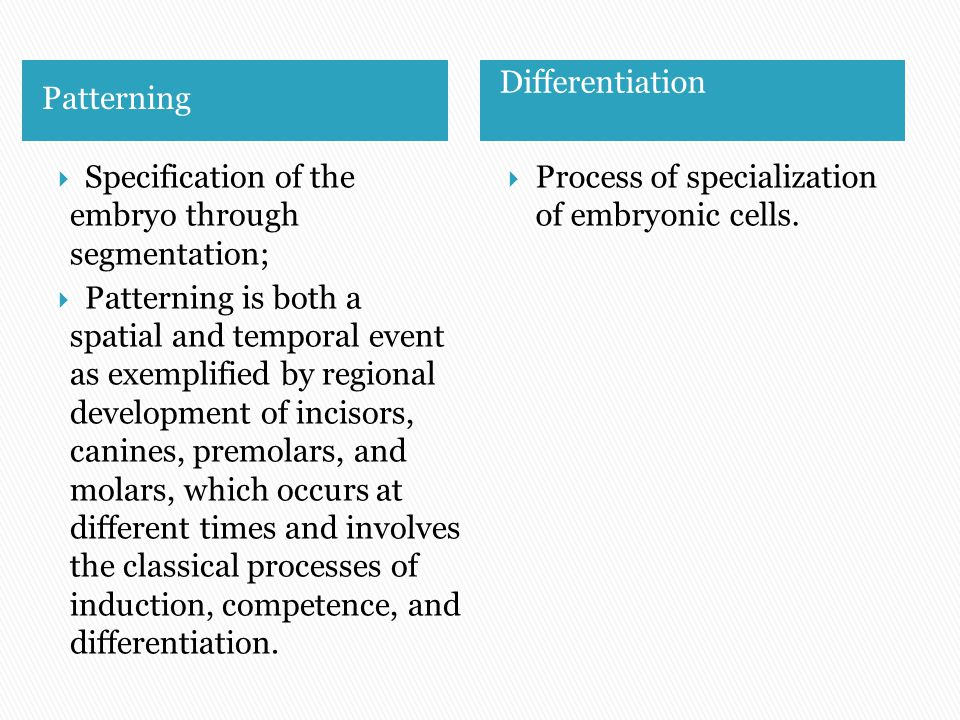 neural crest induction and differentiation embryo human