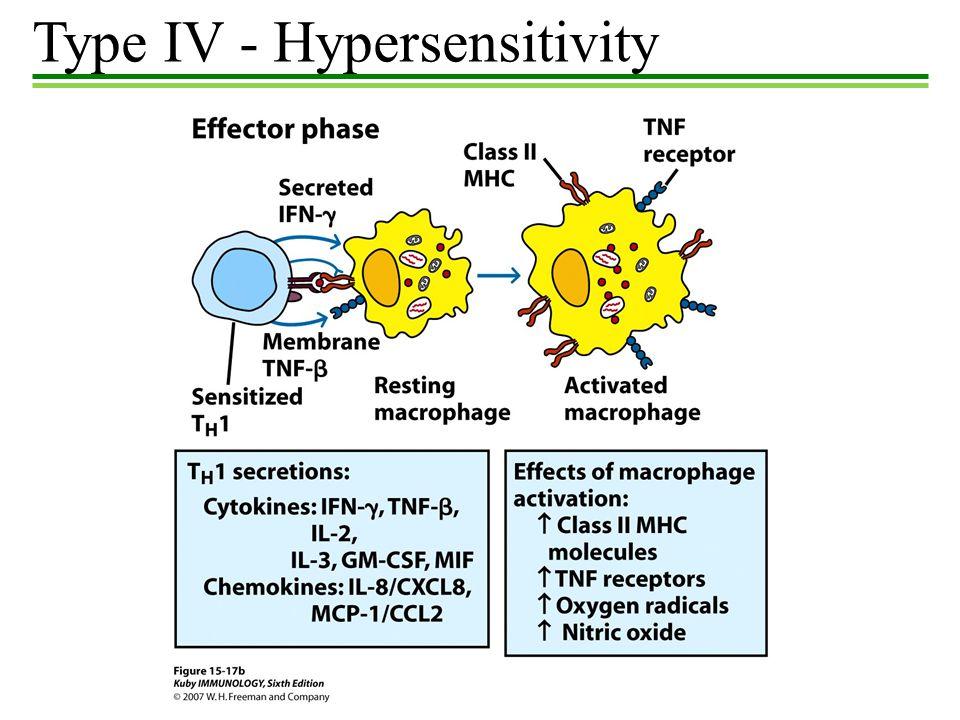 Hypersensitivity Hypersensitivity Exaggerated Immune