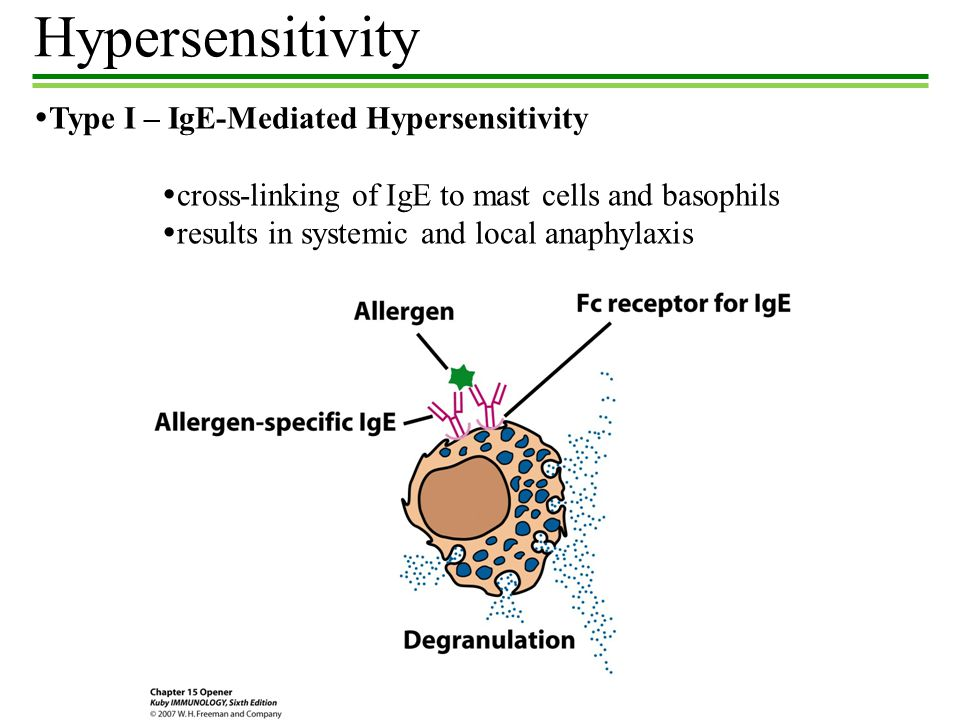 immune response hypersensitivity Hypersensitivity is a hypernym of allergy as nouns the difference between hypersensitivity and allergy is that hypersensitivity is any heightened immune response to an antigen an allergy while allergy is (pathology|immunology) a disorder of the immune system causing adverse reactions to.