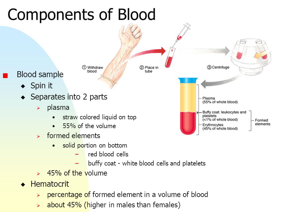 Berühmt Blood Anatomy And Physiology Test Zeitgenössisch - Anatomie ...