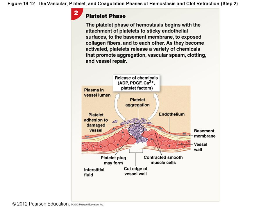 An Introduction to Blood and the Cardiovascular System - ppt download