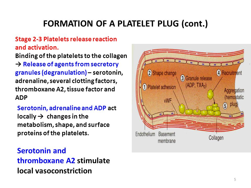 platelet plug formation  · @fboyle-- aspirin prevents platelets from binding together so they will interfere with the formation of a platelet plug as well as blood clotting.