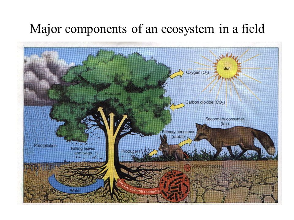 Major components of an ecosystem in a field