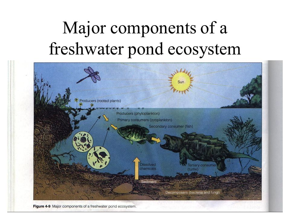 Major components of a freshwater pond ecosystem