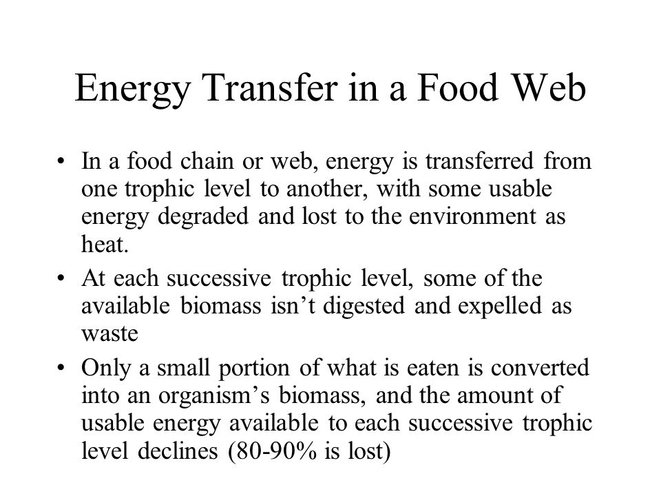 Energy Transfer in a Food Web