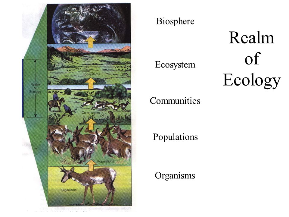 Realm of Ecology Biosphere Ecosystem Communities Populations Organisms
