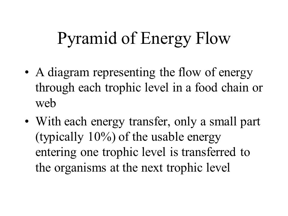 Pyramid of Energy Flow A diagram representing the flow of energy through each trophic level in a food chain or web.