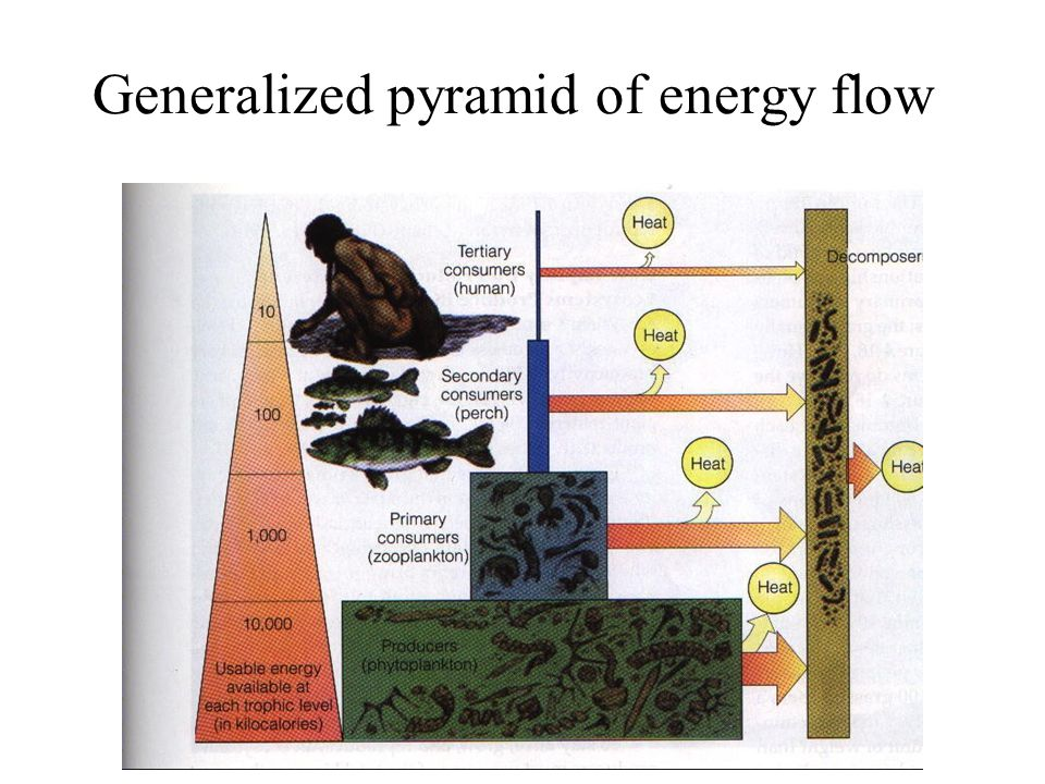 Generalized pyramid of energy flow