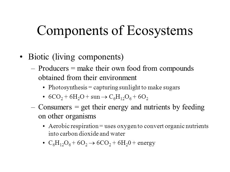 Components of Ecosystems