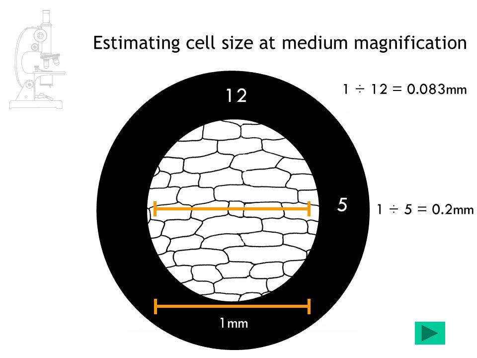 measuring cells