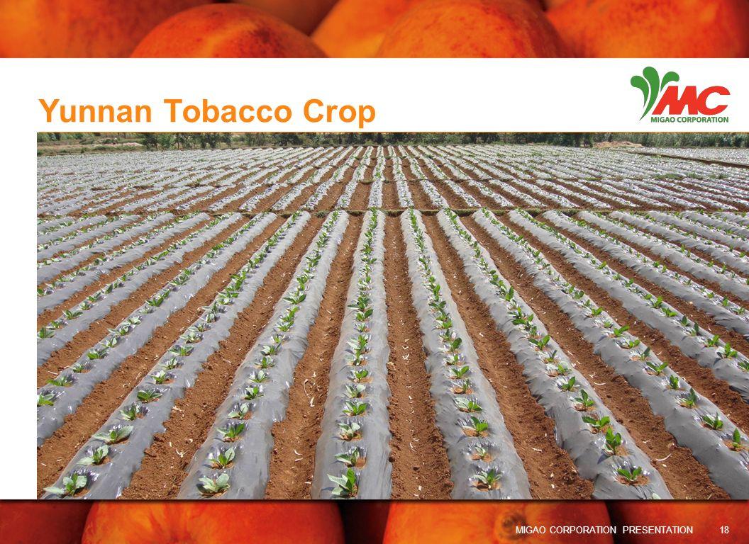 Yunnan Tobacco Crop MIGAO CORPORATION PRESENTATION 18 18