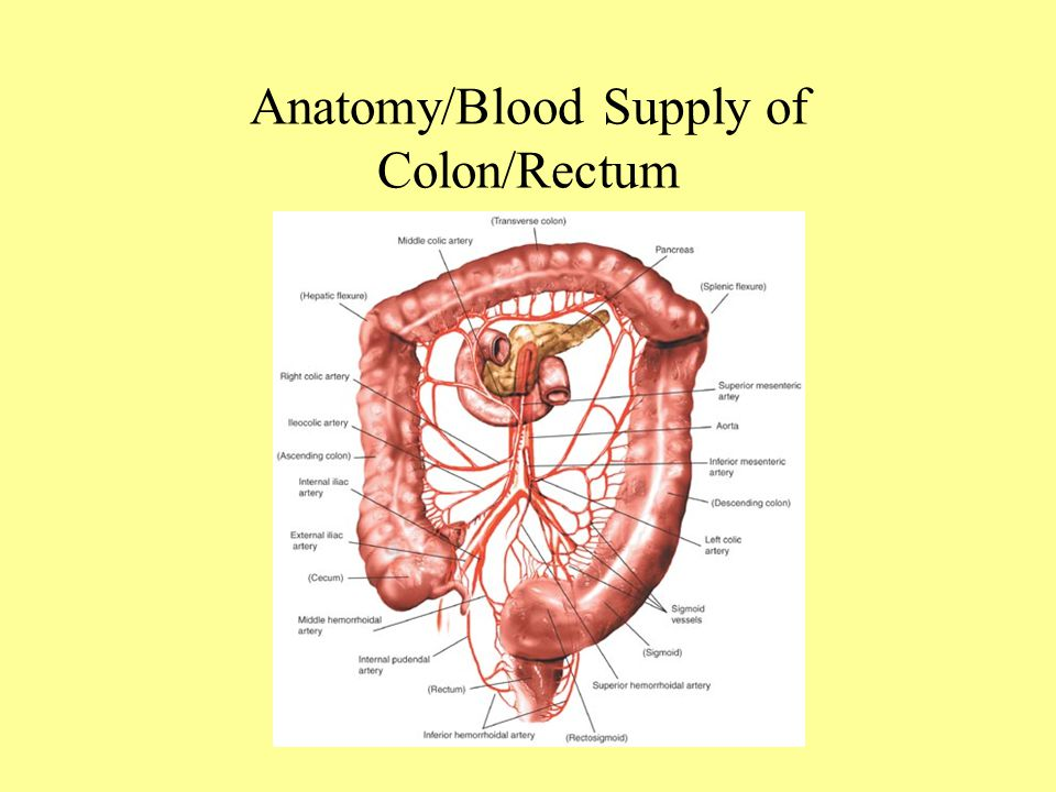 Colon image anatomy