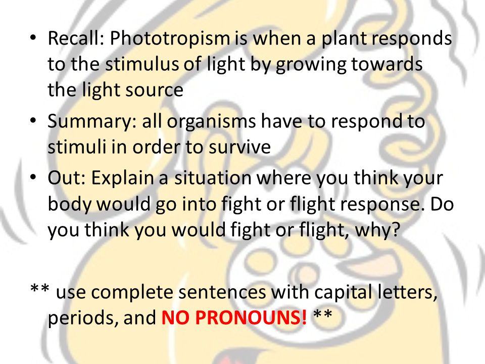 Recall: Phototropism is when a plant responds to the stimulus of light by growing towards the light source