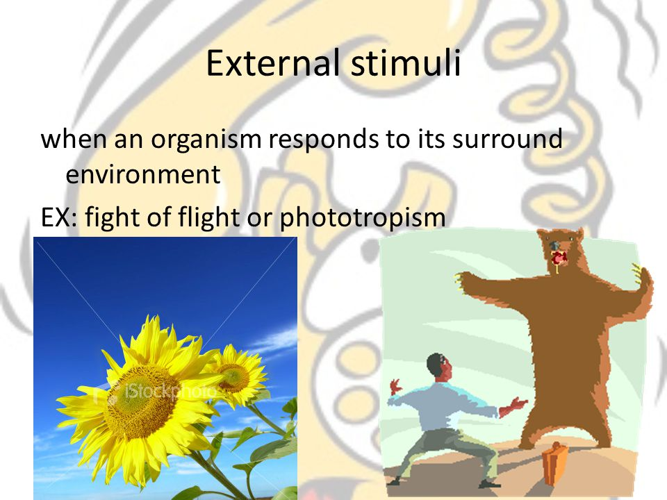 External stimuli when an organism responds to its surround environment EX: fight of flight or phototropism