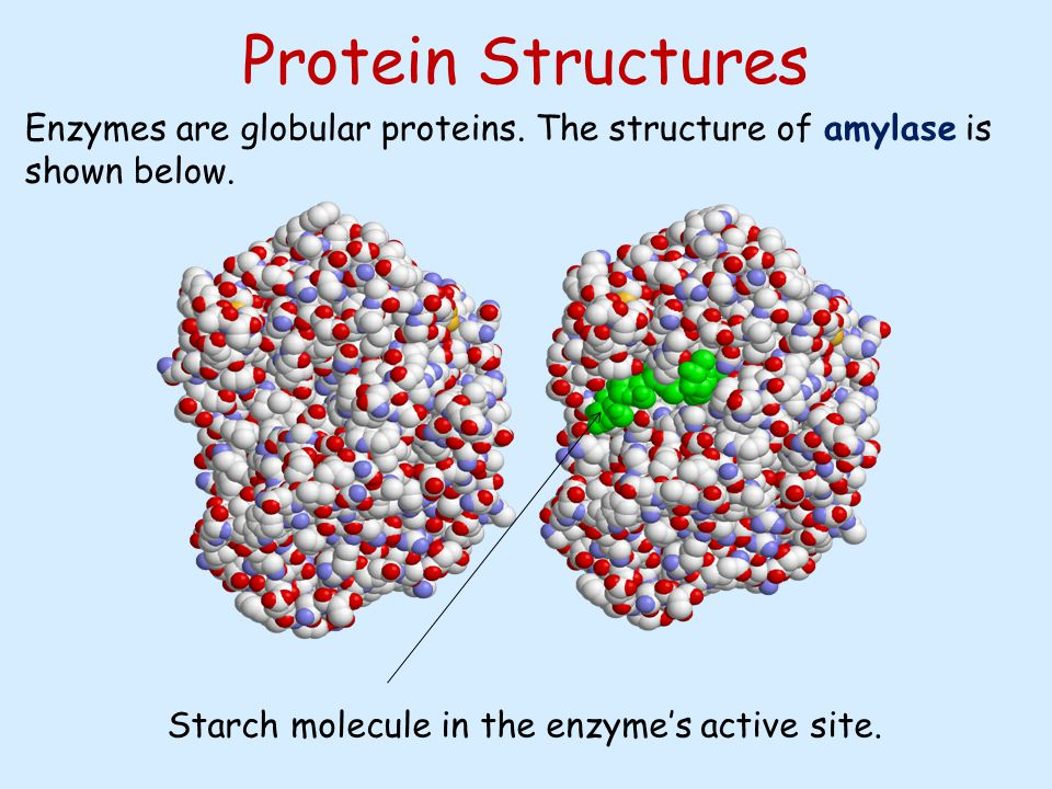 Chemistry of amino acids and protein structure article