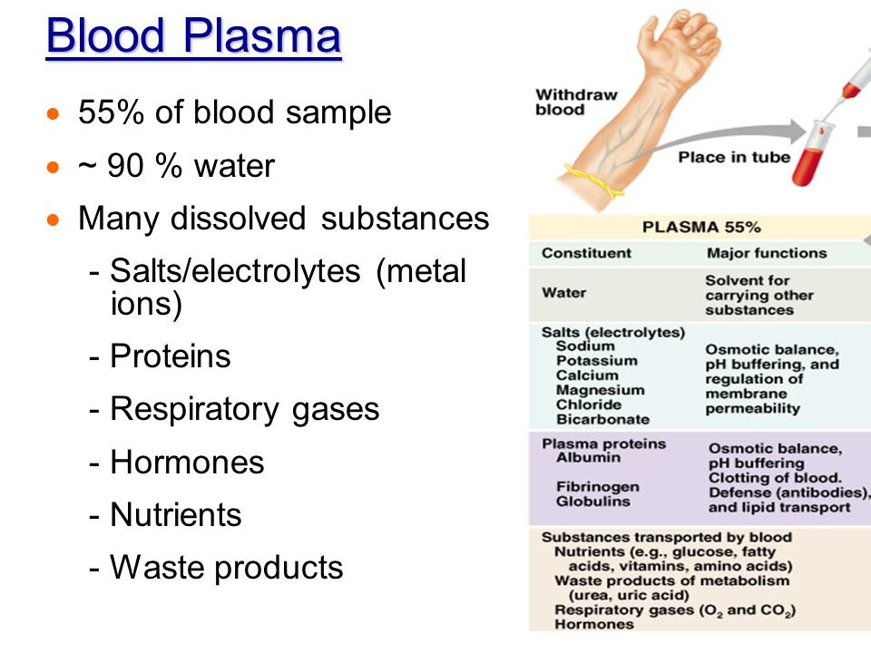 Anatomy and physiology blood worksheet answers